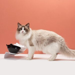 Gerinckímélő etetőtál cicáknak
